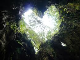 屋久島の縄文杉を見に行ってきました!